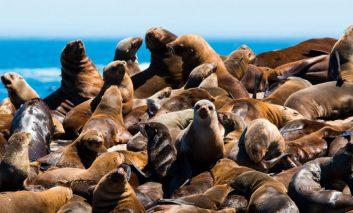 به جزیرههای حیوانات خوش آمدید!