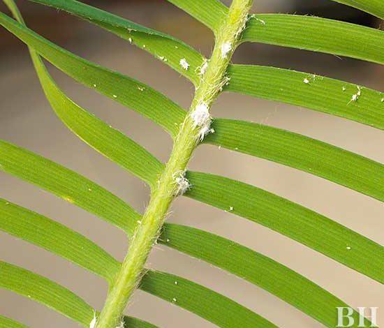 تشخیص و مداوای مشکلات معمول گیاهان خانگی