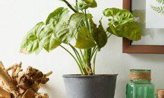 مشکلات معمول گیاهان خانگی و راههای درمان آنها