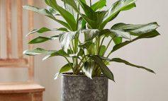 راهنمای کود دهی گیاهان خانگی