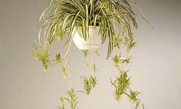 فوت و فن انتخاب گیاه خانگی مناسب