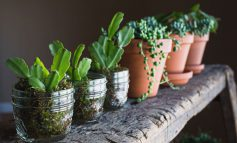 چند نکته ریز راجع به دمای مناسب گیاهان خانگی