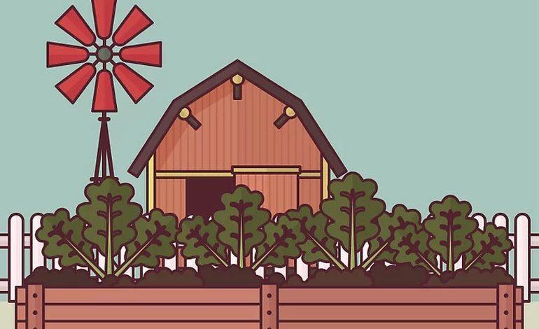 سبزیجات زمستانه پرورش دهید