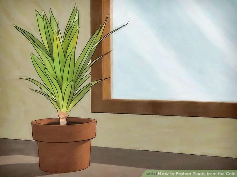 چگونه گیاهانمان را از سرما حفظ کنیم؟