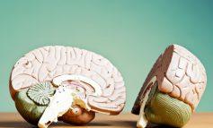 نیمکره چپ در برابر نیمکره راست مغز: چگونه یکی از اینها غالب میشود؟