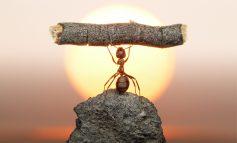 عکسهایی فانتزی و طبیعی از مورچهها