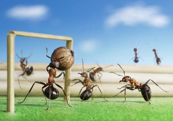 عکسهایی فانتزی و طبیعی از مورچهها – قسمت دوم