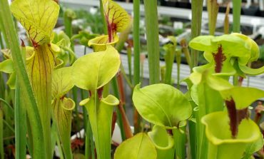 فوت و فن پرورش گیاه کوزهای