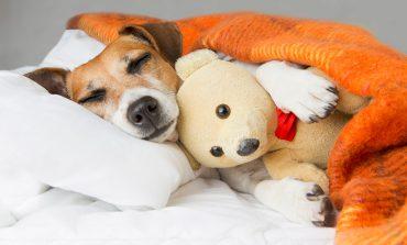 ۱۰ نکته برای درامان نگه داشتن سگ و گربهتان در هوای سرد
