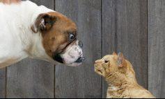 چرا گربهها بهتر از سگها هستند؟