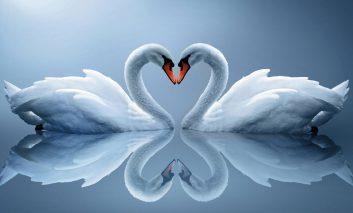 ۱۰ حیوان رمانتیک دنیا