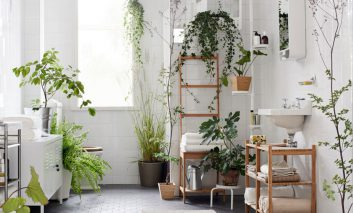 گیاهانی که با شخصیت شما جور درمیآیند