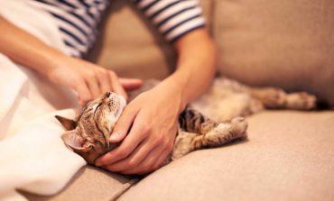 بیماریهای شایعی که از گربه به انسان قابل انتقال هستند