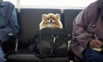 فوت و فن سفر با سگتان!
