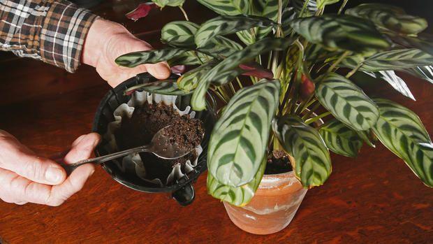 گیاهانی که قهوه دوست دارند
