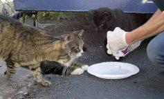 میخواهید یک گربه خیابانی را به خانه بیاورید؟