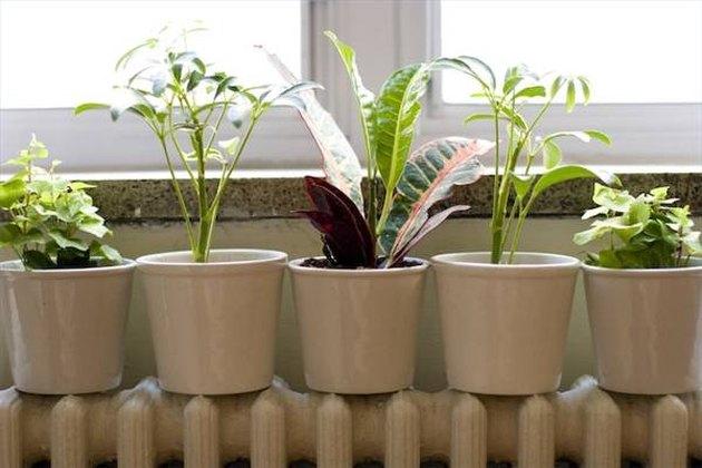تفاوت بین گیاهان درون و بیرون خانه چیست؟