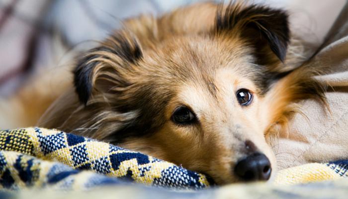 چطور موی حیوانات خانگی را از روی مبلمان پاک کنیم