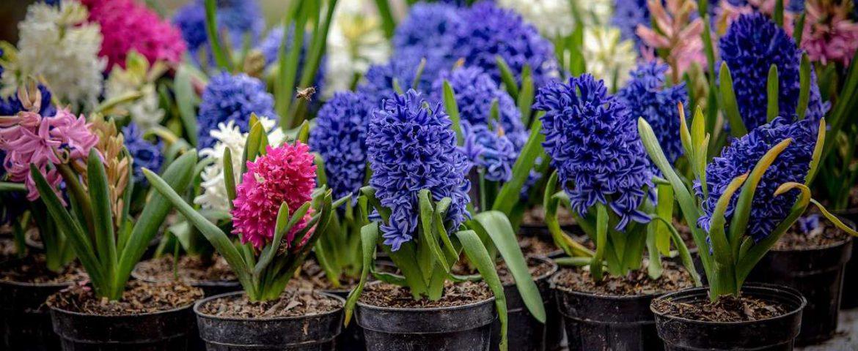 گلهای مخصوص نوروز را تهیه کنید