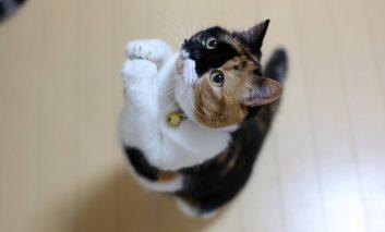 چطور گربهمان را از التماس کردن بازداریم؟
