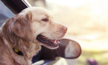 تشخیص بیماری صرع توسط سگ، از طریق حس بویایی