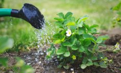 بهترین زمان آبیاری گیاهان در تابستان