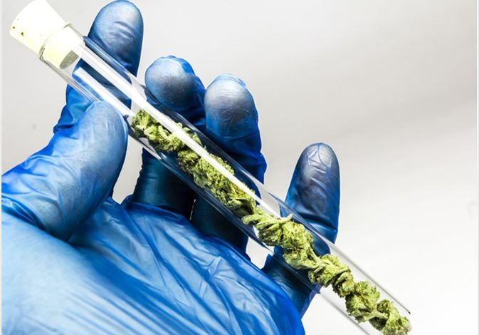 آیا ماریجوانا بر اسپرمها تاثیر میگذارد؟