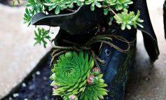 حشرات ریز سیاه روی ساکولنت و راه مبارزه با آنها