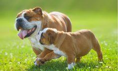 ۱۰ حقیقت جالب درباره سگها