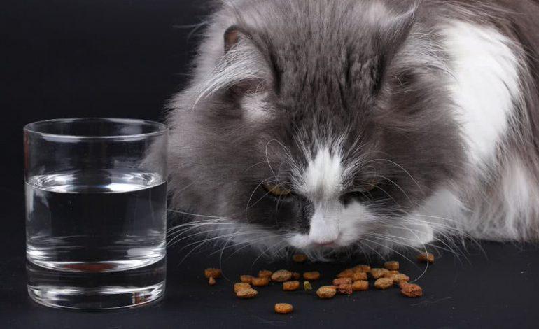 هرگز این ۸ غذا را به گربهتان ندهید!