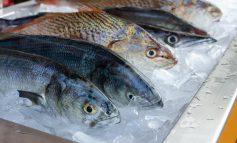 افزایش سطح جیوه در بدن ماهیها