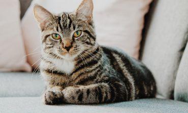 چند اسم ایرانی برای گربه بامزه شما