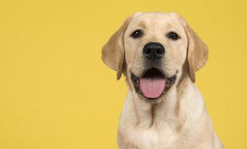 تحقیقات جدید روش بهتری برای محاسبه سن واقعی سگها پیدا کرده است