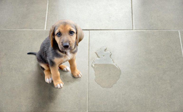 مردود شدن آموزش و تربیت سگها مبتنی بر تنبیه