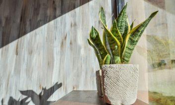 چگونه گیاهان آپارتمانی را در زمستان زنده نگه داریم؟