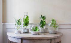 باغچه آبی آپارتمانی: معرفی گیاهان مناسب و ایدههایی برای شروع