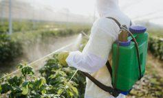 سموم دفع آفات، مرتبط با افزایش خطر مرگ و میر