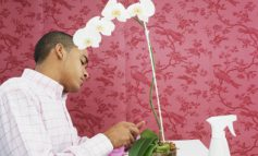 اگر ارکیده شما تمام گلهای خود را از دست بدهد چه باید بکنید؟