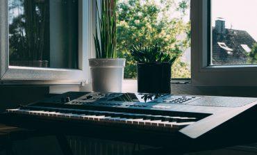 آیا گیاهان از موسیقی لذت میبرند؟ آنها چه نوع موسیقی دوست دارند؟