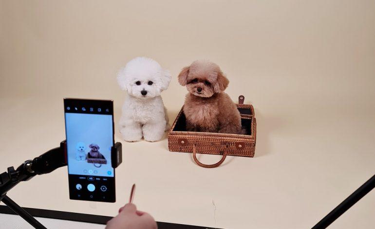 راهنمای عکاسی از حیوانات خانگی با گلکسی نوت۲۰ سامسونگ