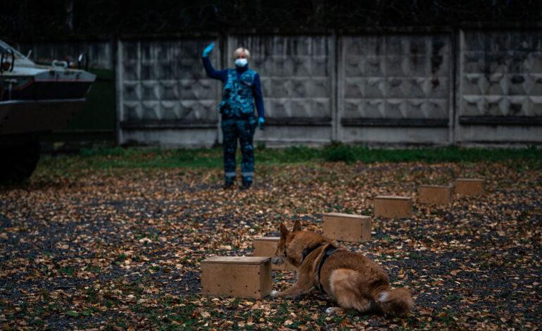 یک مربی از سرویس سگهای حامل در نزدیکی فرودگاه بین المللی Sheremetyevo مسکو