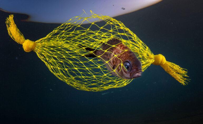 آب نبات زرد : نایب قهرمان ، حفاظت از دریا.