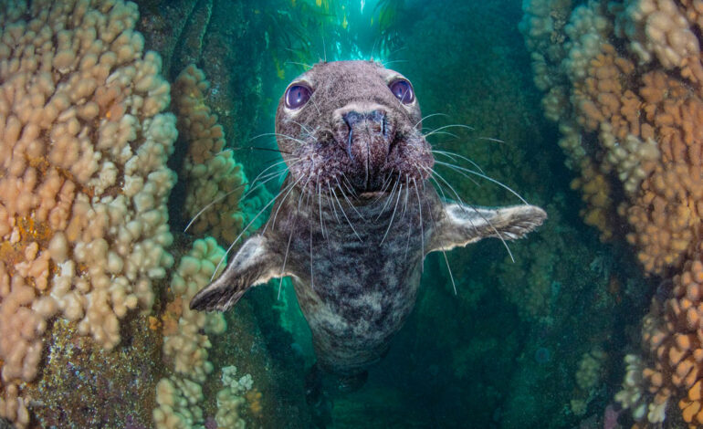 Grey Seal Gully: مقام سوم ، زاویه باز آبهای انگلیس.