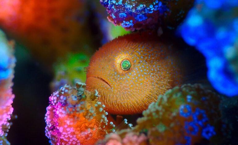 برندگان مسابقه عکاس سال زیر آب در سال ۲۰۲۱