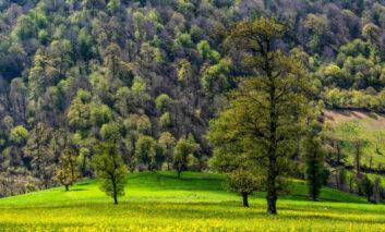 سامسونگ کمپین «برای خودمان، برای طبیعت» را برگزار میکند