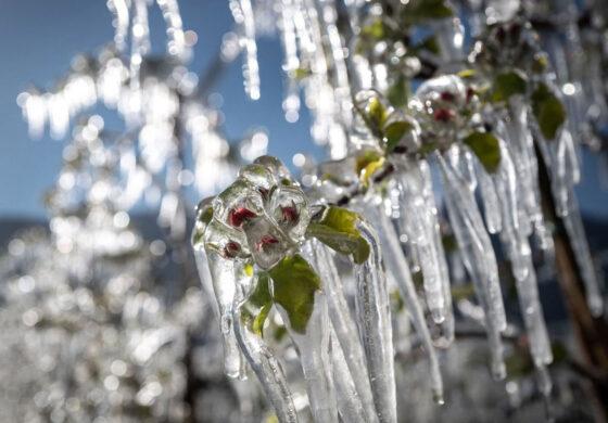 محافظت از محصولات در برابر یخزدگی بهار