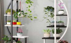 گلهای منزل خود را زیباتر کنید+عکس و آموزش