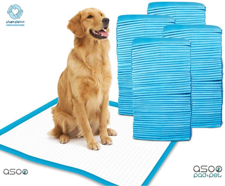 راهنمای جامع 0 تا 100 خرید بهترین پد دستشویی سگ