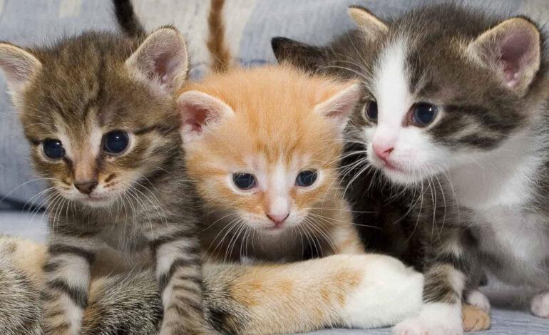 خانه خود را قبل از ورود گربه به محل مناسب برای او تبدیل کنید